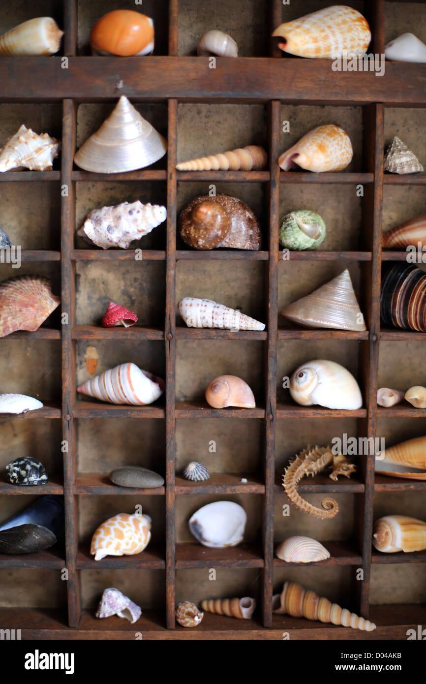 Raccolta della shell Immagini Stock