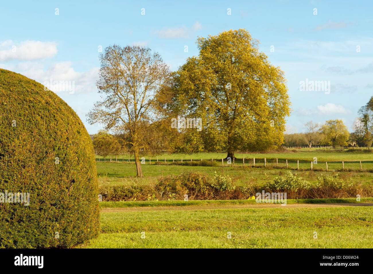 Topiaria da hedge nei campi. Immagini Stock