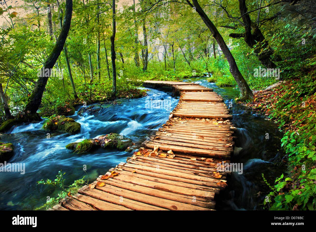 Sentiero forestale percorso con stream Foto Stock