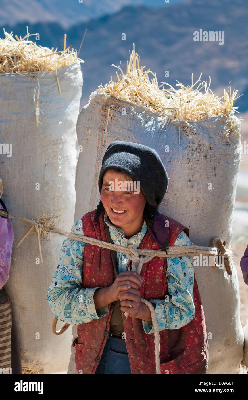 Le donne portano lontano chaf dal pavimento di trebbiatura durante la raccolta autunnale, Tibet, Cina Immagini Stock