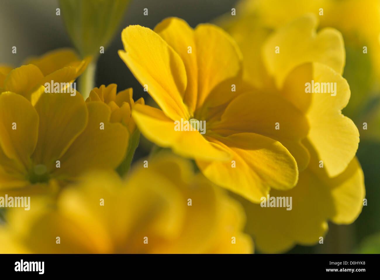 Fiori Gialli Invernali.Fiori Gialli D Inverno Immagini Fiori Gialli D Inverno Fotos