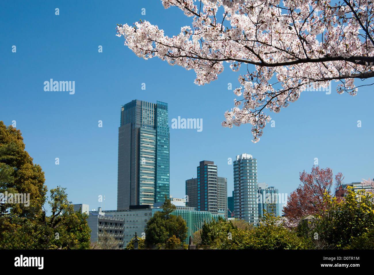 Giappone, Asia, vacanze, viaggi, Tokyo, Città, Tokyo, Skyline, fiori di ciliegio, molla, struttura ad albero Immagini Stock