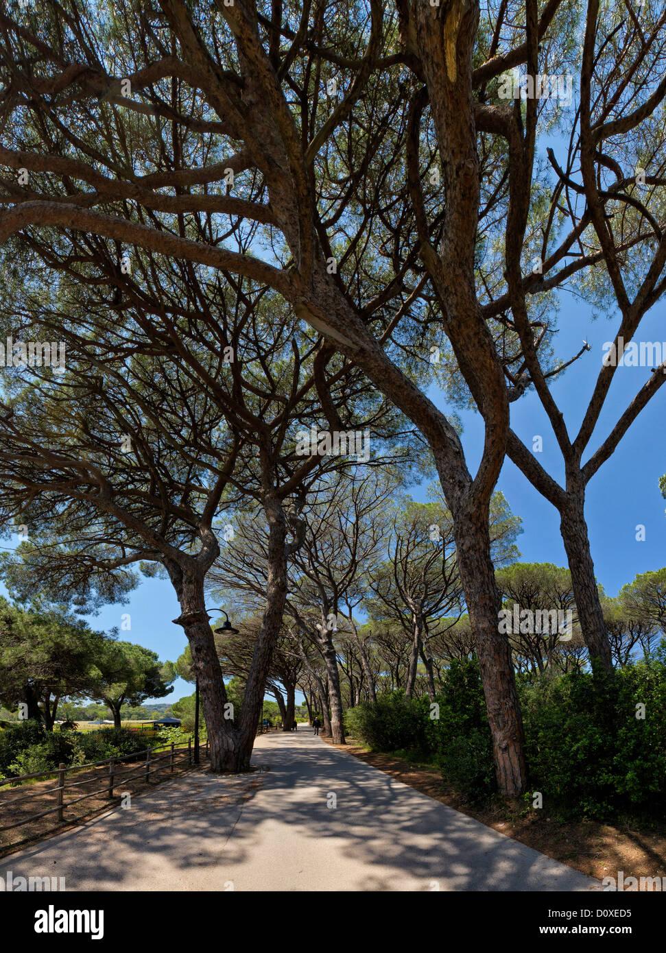 Punta Ala, Italia, Europa, Toscana, Toscana, street avenue Immagini Stock