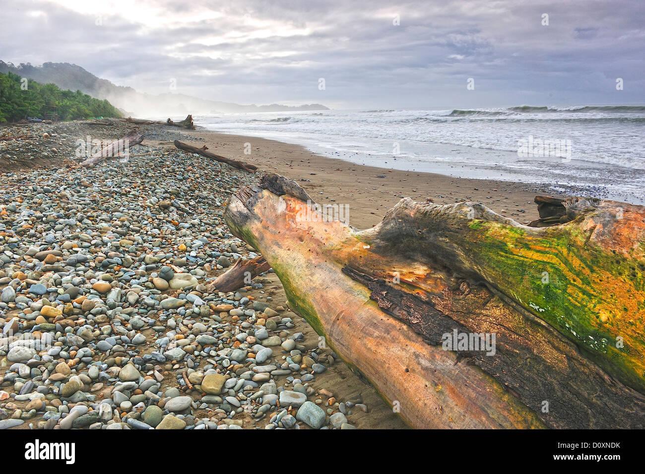 America centrale, Costa Rica, spiaggia ghiaiosa, Pacific Coast, robusto, surf, driftwood Immagini Stock