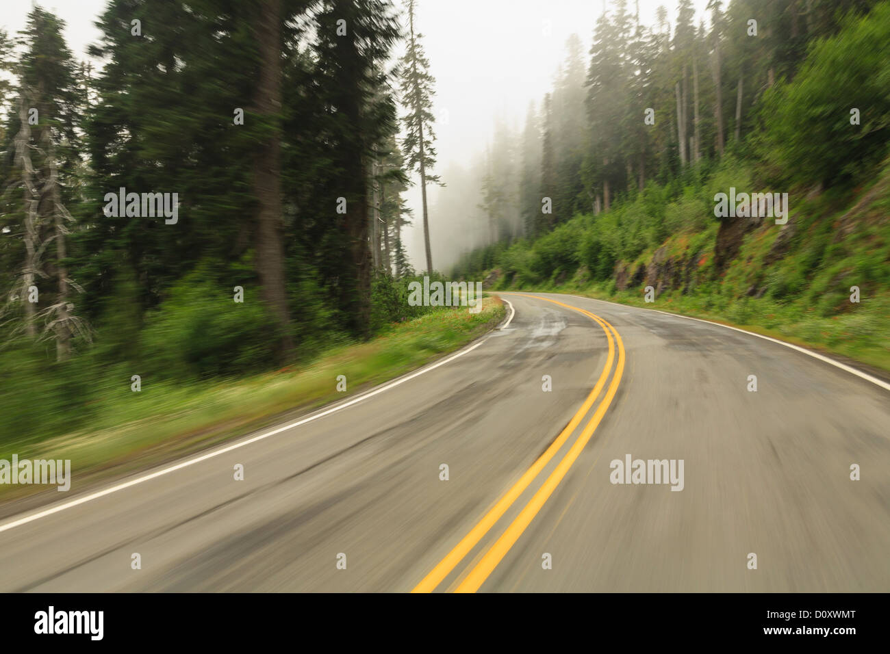 Strada del Paradiso (Washington State Route 706), il Parco Nazionale del Monte Rainier, Washington, Stati Uniti Immagini Stock