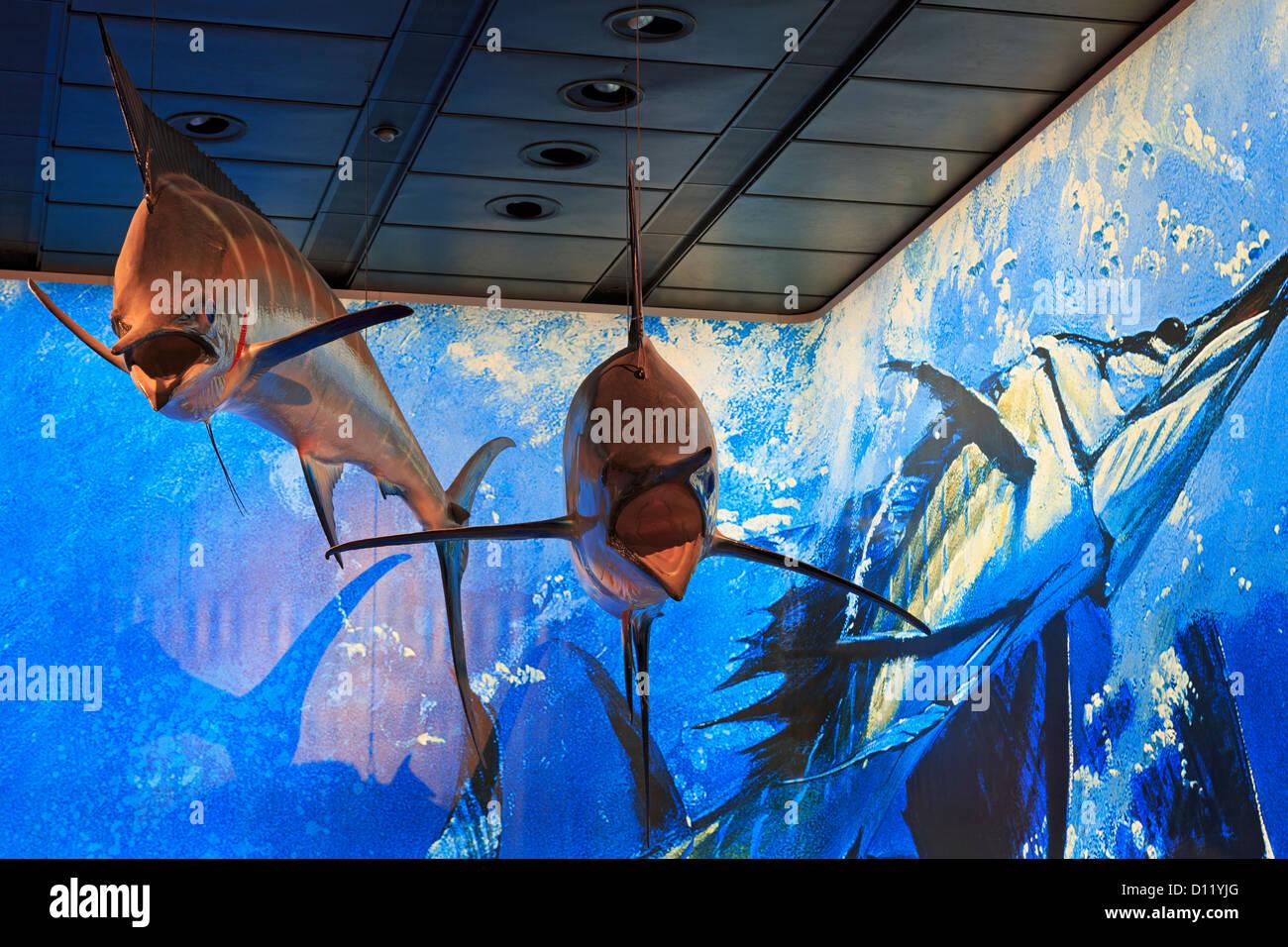 Marlin presentano nel Museo di Scienze Naturali,Herman Park,Houston, Texas, Stati Uniti d'America Immagini Stock