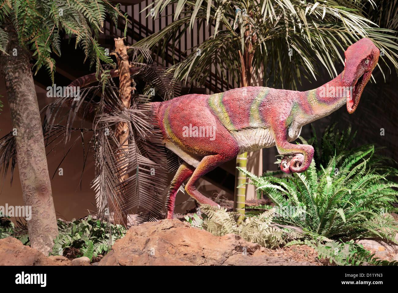 Coelophysis nel Museo di Scienze Naturali,Herman Park,Houston, Texas, Stati Uniti d'America Immagini Stock
