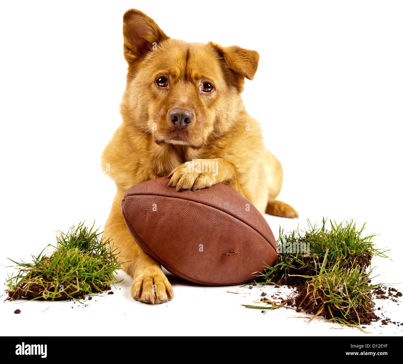 Cane in posa con il calcio e con zolle d'erba. Isolato su bianco Immagini Stock