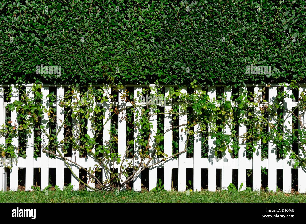 White Picket Fence, New England, STATI UNITI D'AMERICA Immagini Stock