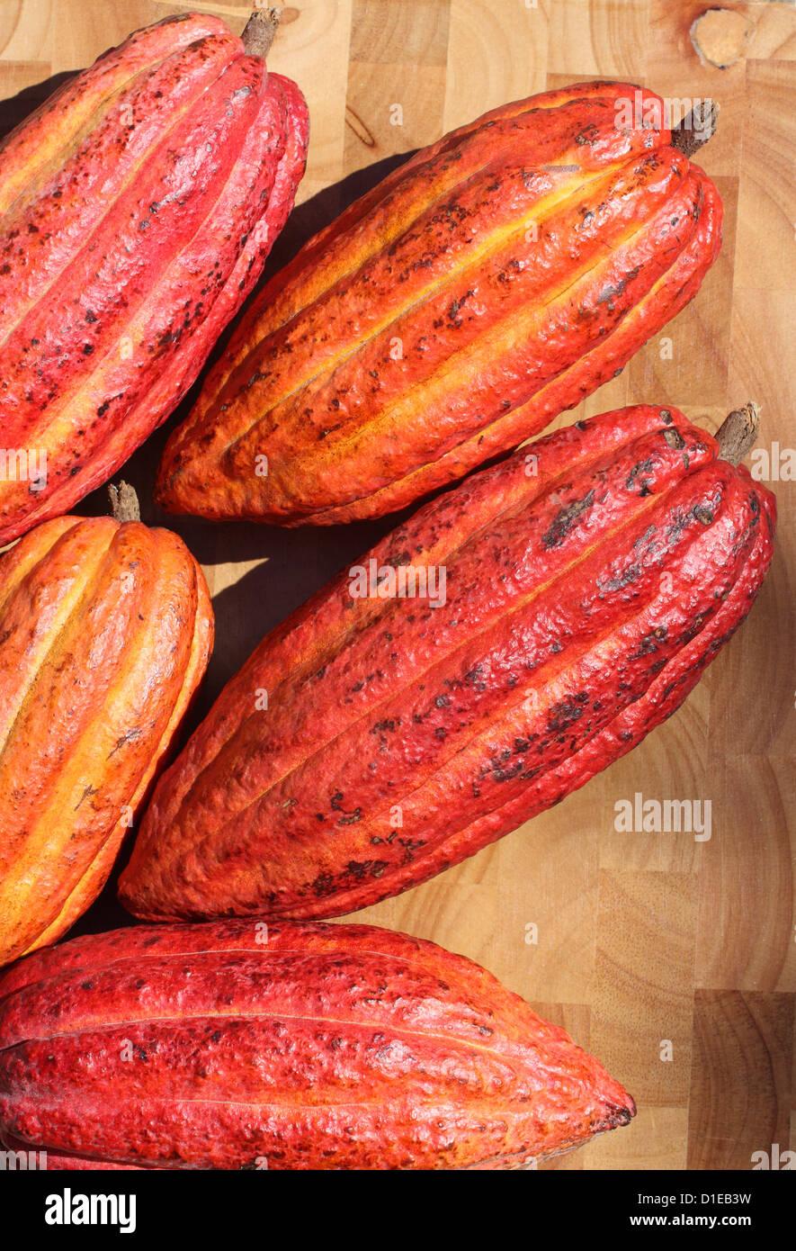 Grenada. Close-up di Cacao maturi (cacao) frutti. Immagini Stock