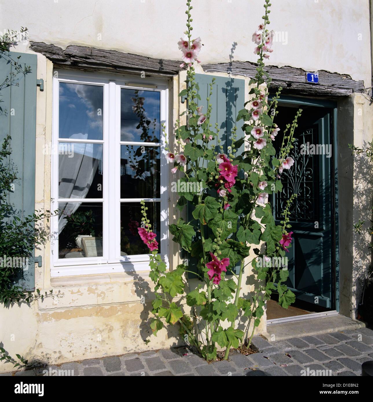 Tipica scena di finestre con persiane e hollyhocks, San Martino, Ile de Re, Poitou-Charentes, Francia, Europa Immagini Stock