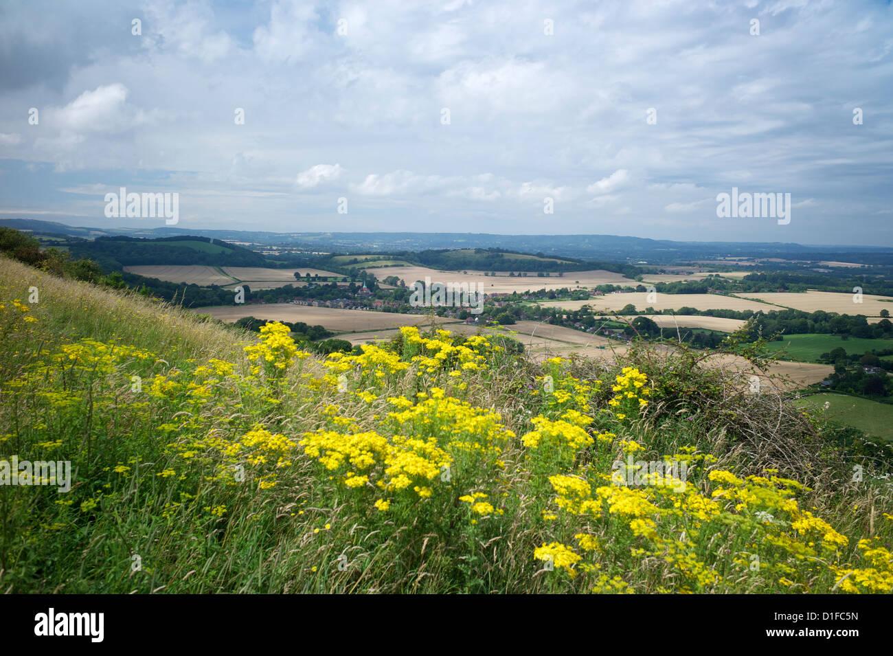 A sud verso il basso modo, vicino a sud Harting, Hampshire, Inghilterra, Regno Unito, Europa Immagini Stock
