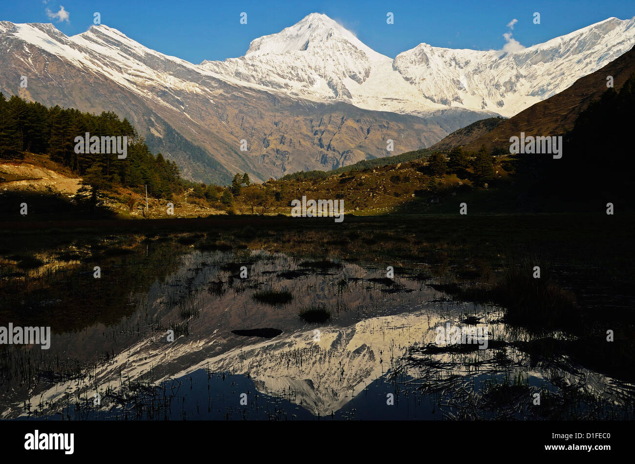 Dhaulagiri Himal visto da Titi, Annapurna Area di Conservazione, Dhawalagiri (Dhaulagiri), Regione Occidentale (Pashchimanchal), Immagini Stock