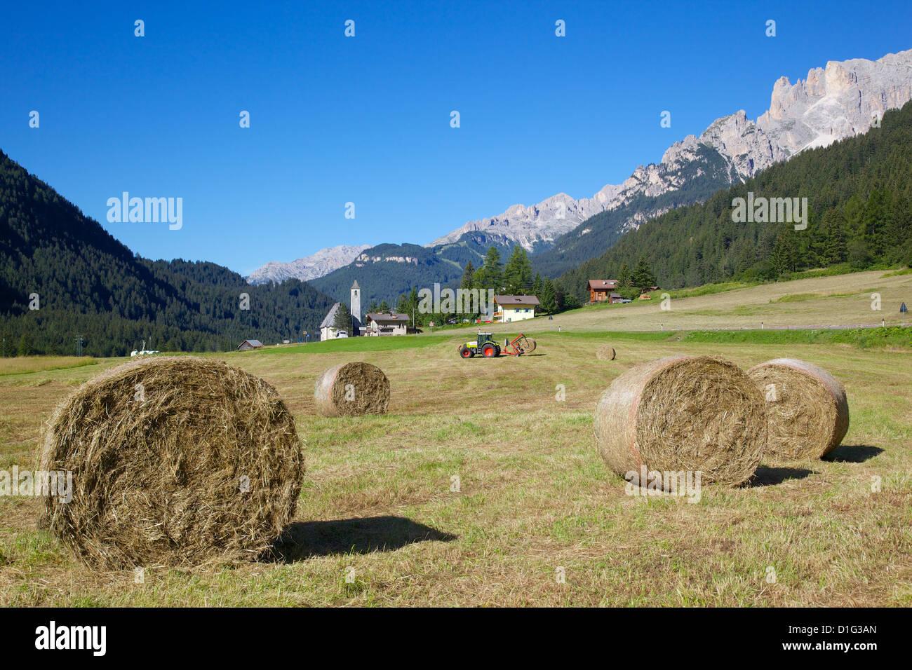 Campo di fieno vicino a Canazei, Canazei, Trentino Alto Adige, Italia, Europa Immagini Stock