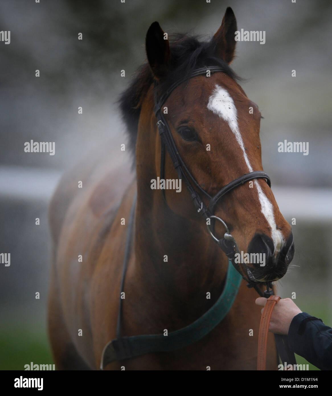 L'ultima riunione a Folkestone Racecourse, Westenhanger, Kent, XVIII Dicembre 2012. Vapore sorge da un cavallo Immagini Stock