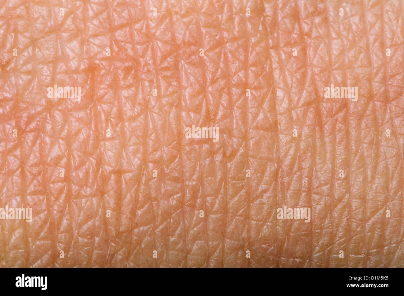 La pelle umana vicino. Struttura della pelle Immagini Stock