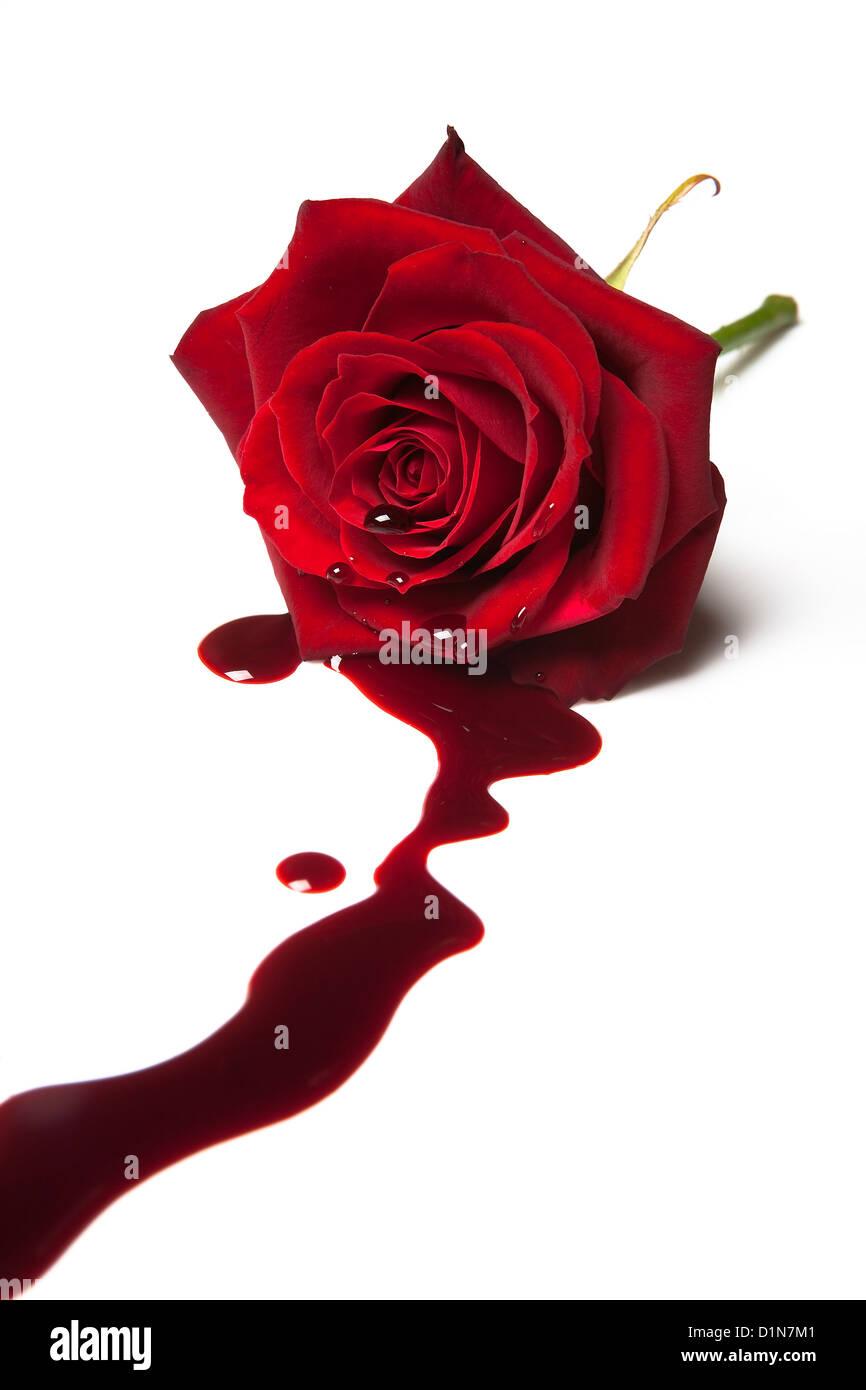 Rosa rossa con il sangue che scorre al di fuori del suo cuore Foto Stock