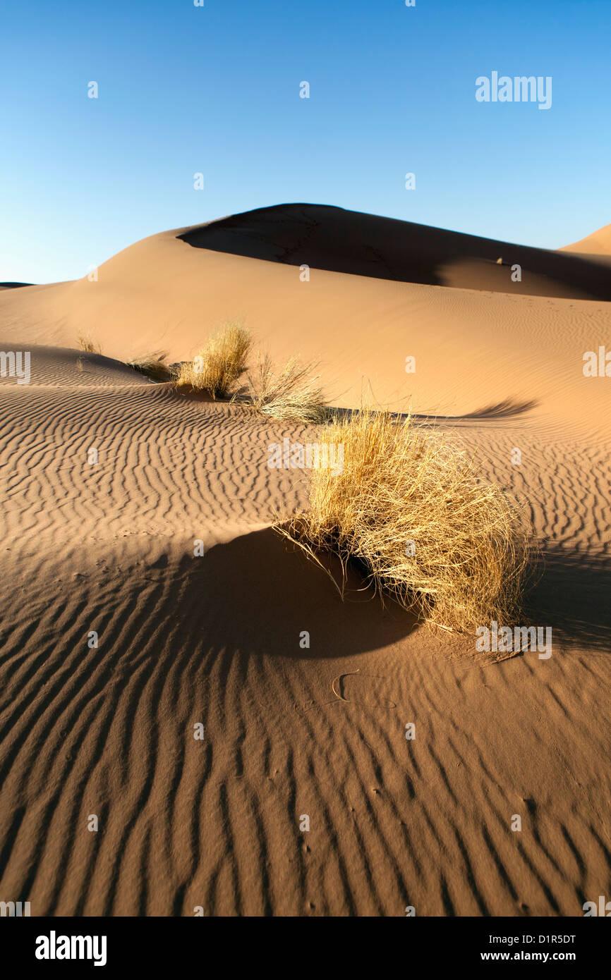 Il Marocco, M'Hamid, Erg Chigaga dune di sabbia. Deserto del Sahara. Tourist Camp, bivacco. Immagini Stock