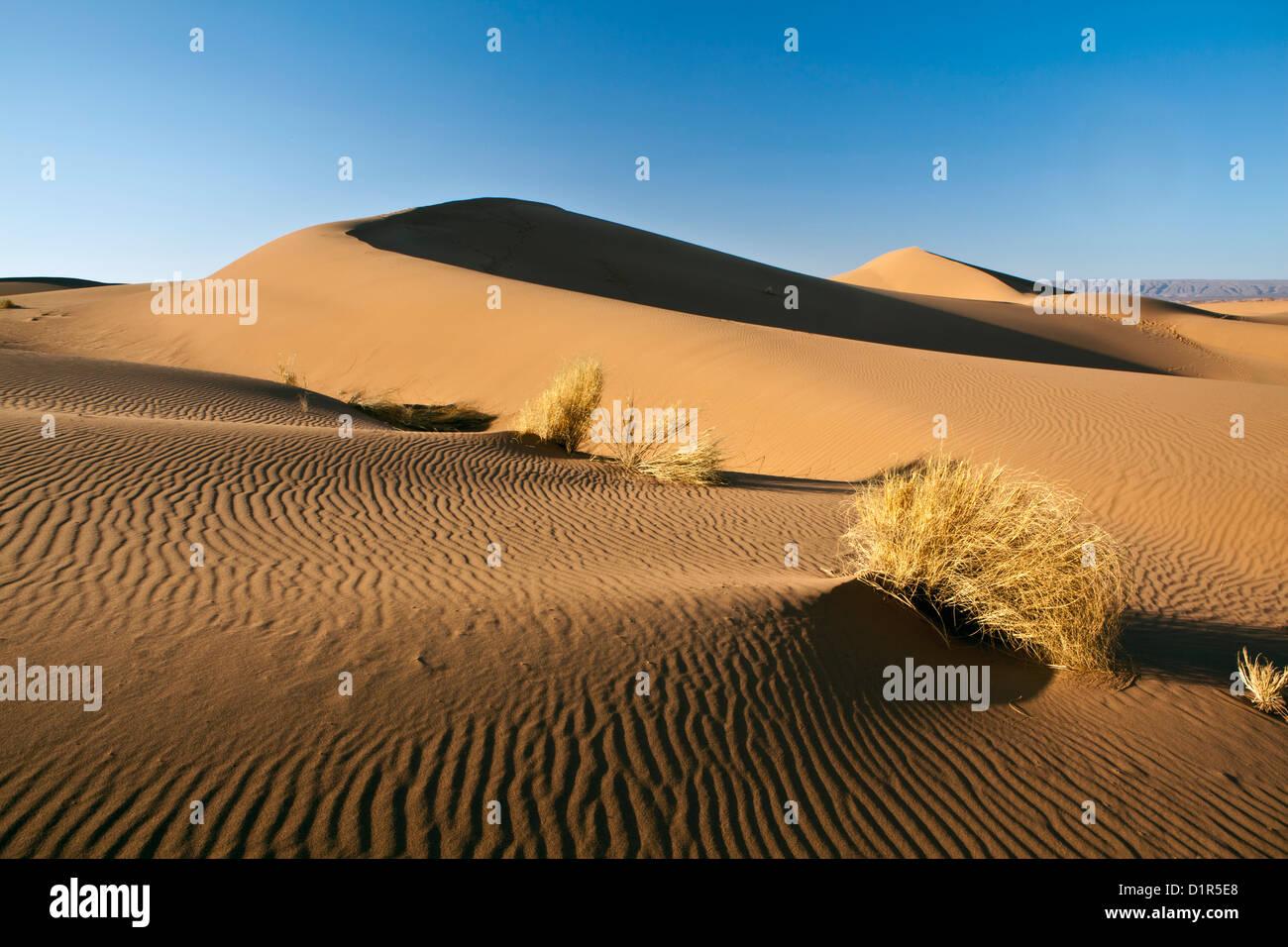 Il Marocco, M'Hamid, Erg Chigaga dune di sabbia. Deserto del Sahara. Tourist Camp, bivacco. Foto Stock