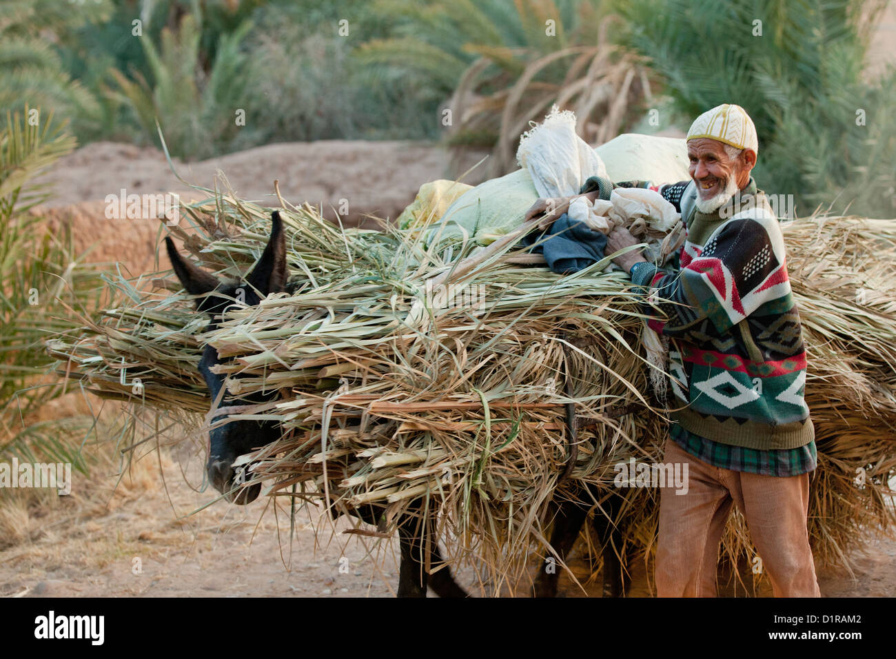 Man carrying donkey immagini & man carrying donkey fotos stock alamy