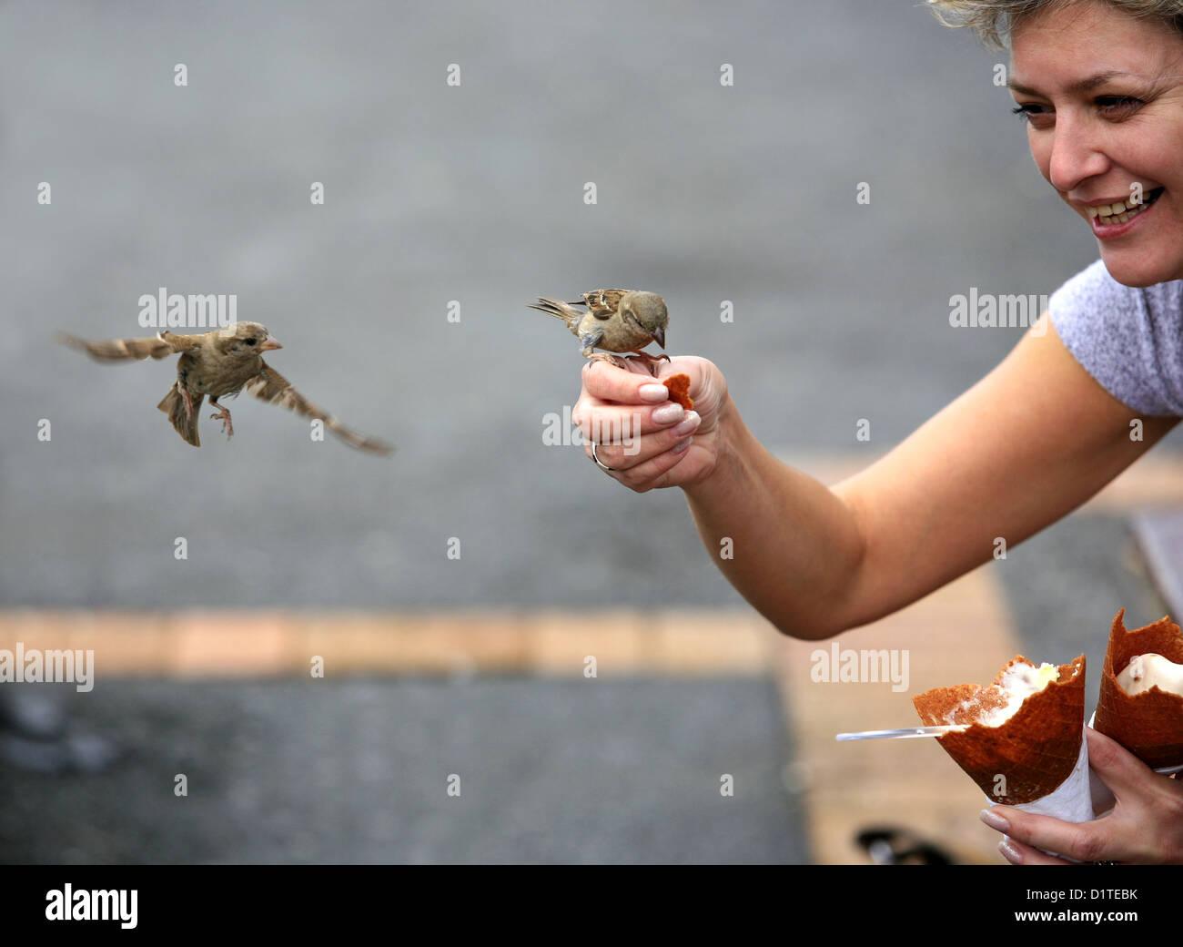 La donna alimenta passeri in strada Immagini Stock