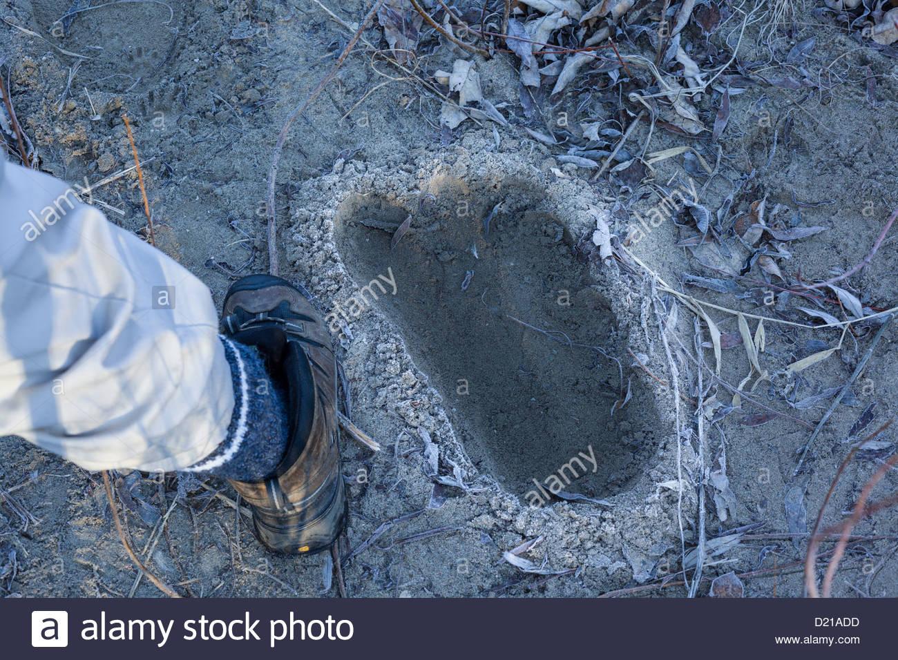 La prova scientifica che il Bigfoot roams molto remoti angoli del Rouge Nazionale Parco urbano all'interno di Immagini Stock