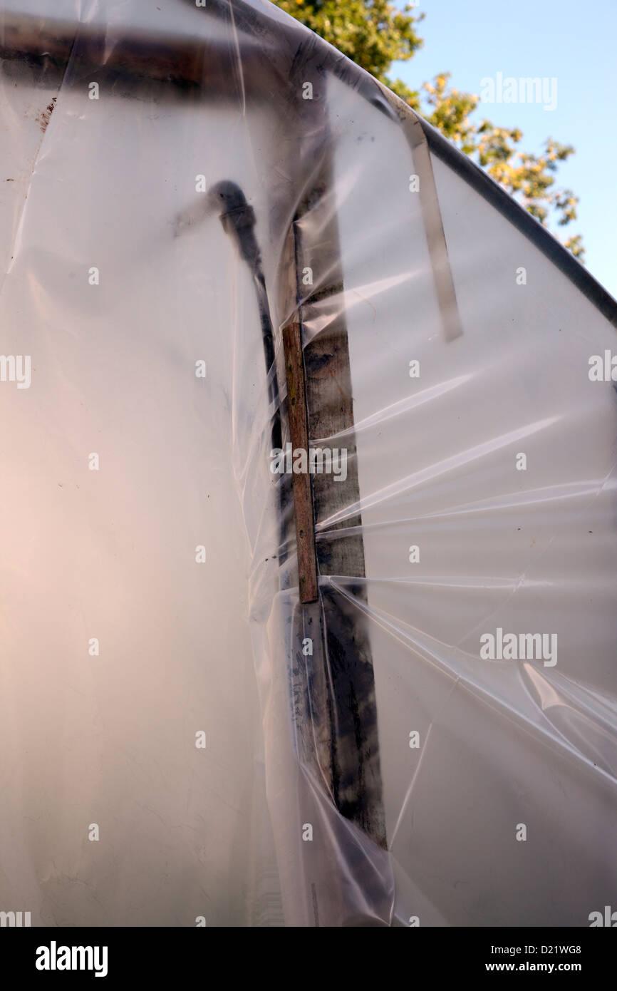 Sostituzione del coperchio in polietilene di un polytunnel - il tensionamento del foglio nuovo intorno al telaio Immagini Stock