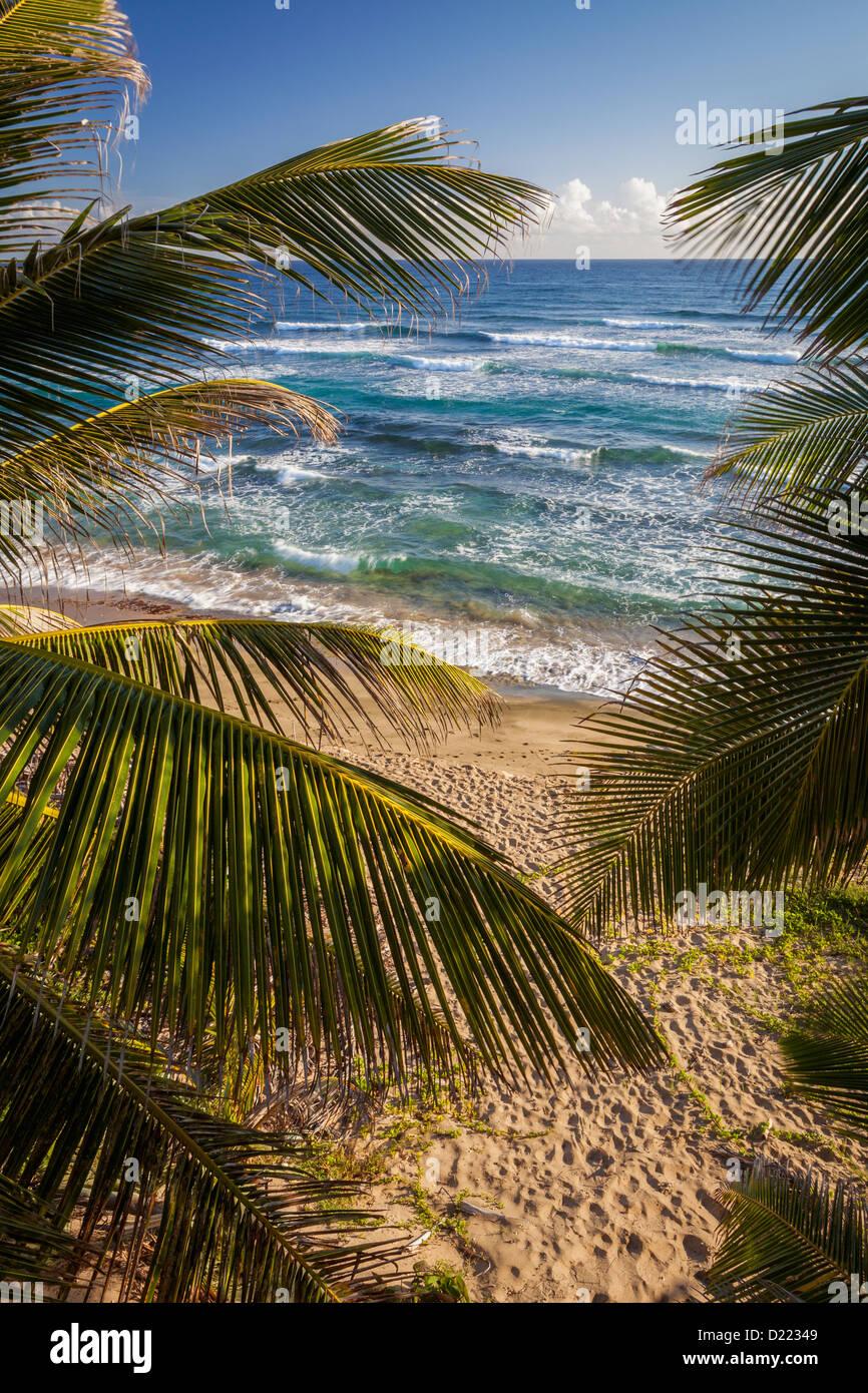 Isabel Beach, Puerto Rico, palme Immagini Stock