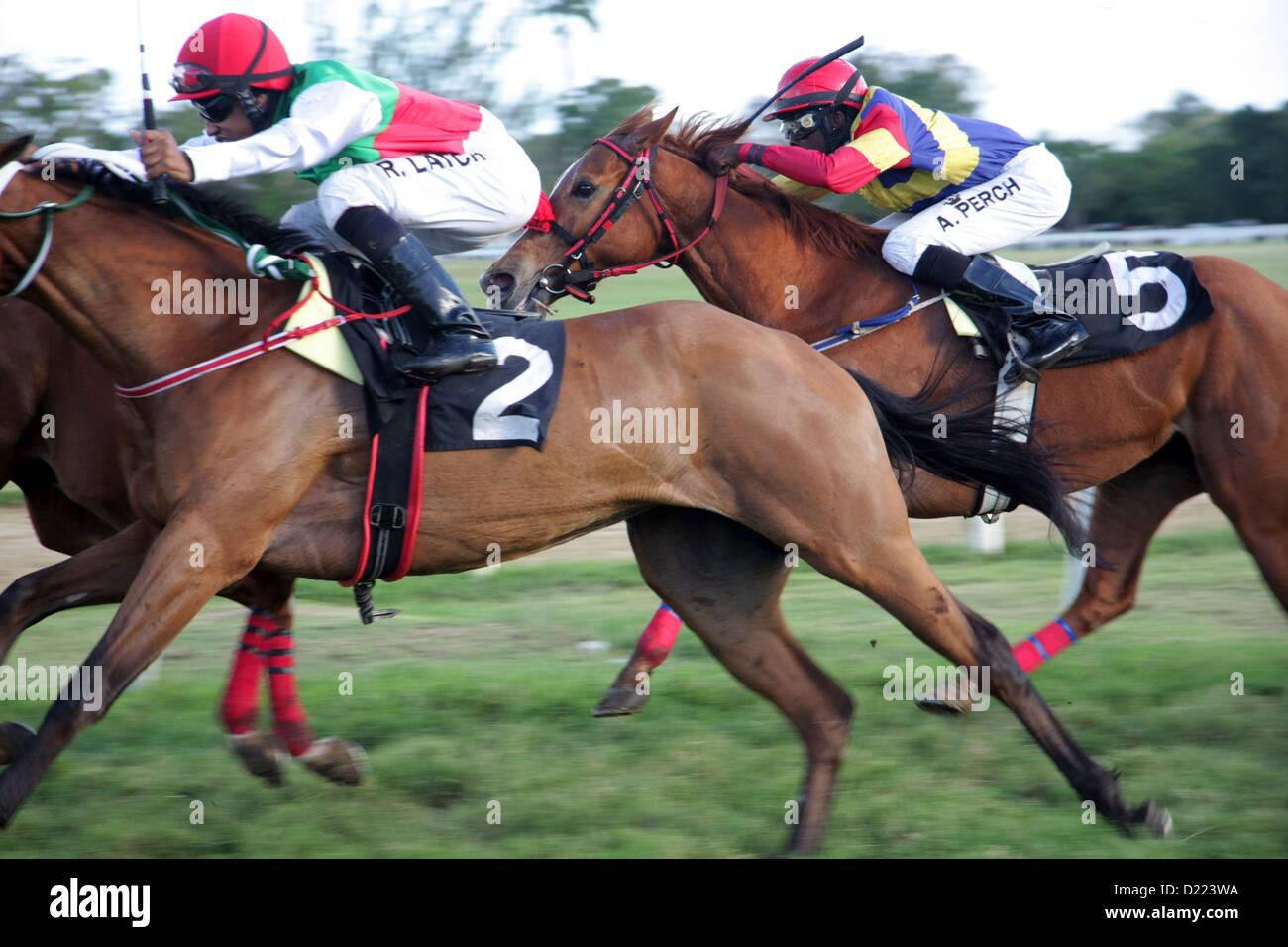 Horse Racing al Savannah Racecourse, Bridgetown, Barbados Immagini Stock