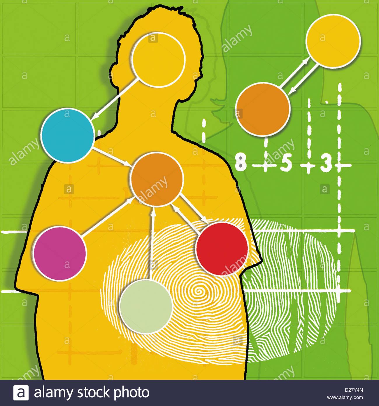 I geni e le impronte digitali sulla silhouette di un uomo e di una donna Immagini Stock
