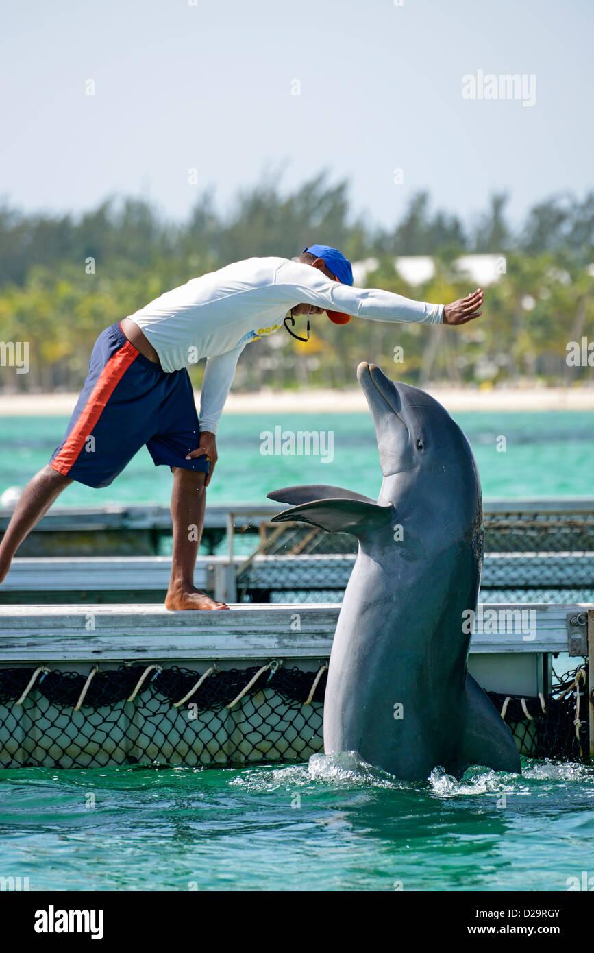 Uomo con il tursiope o delfino maggiore al Dolphin Center Explorer, Punta Cana Repubblica Dominicana Immagini Stock