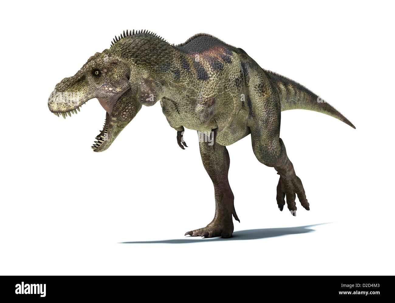 Tyrannosaurus rex dinosauro T rex è stato uno dei più grandi dinosauri carnivori Immagini Stock