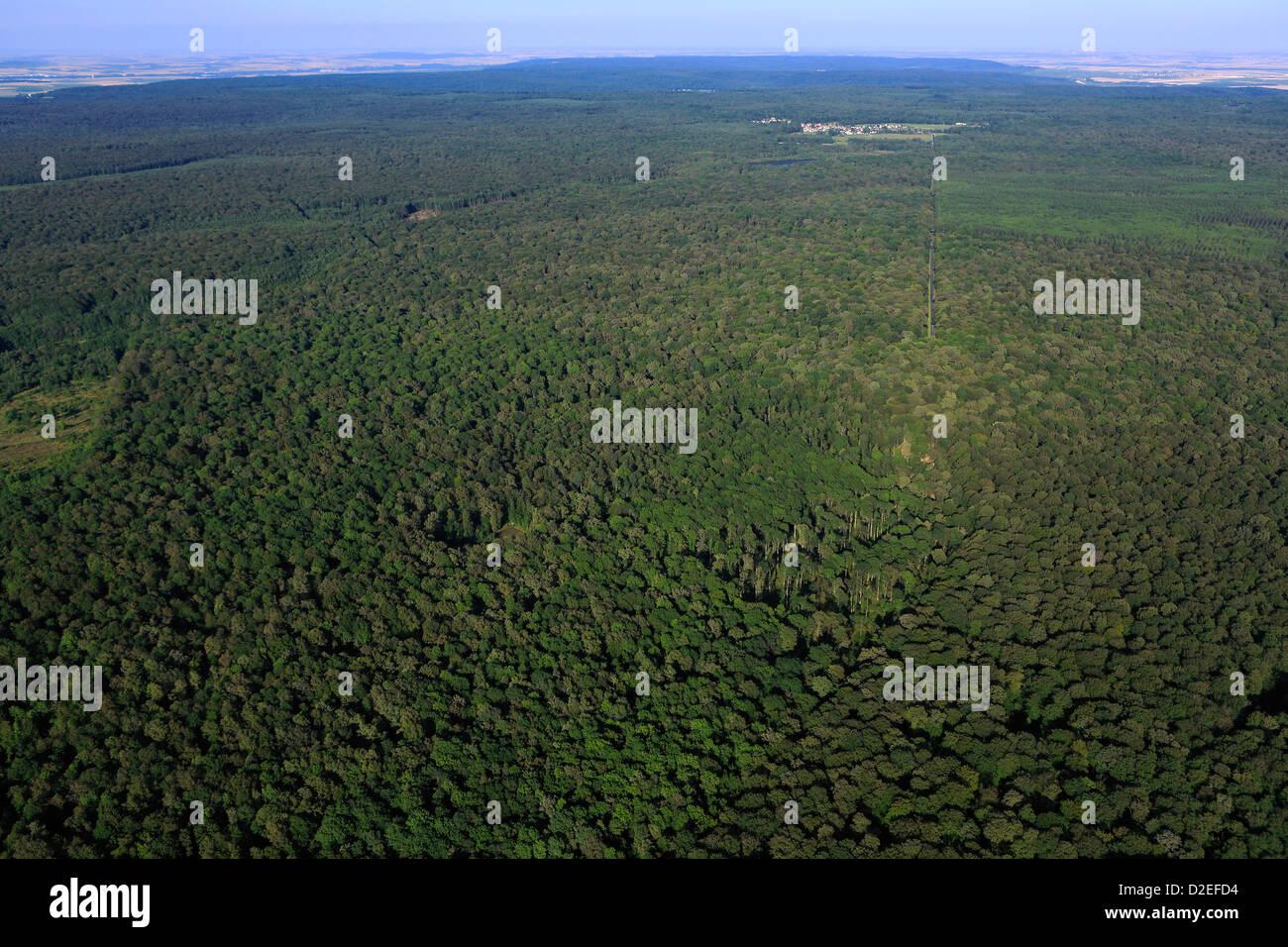 Francia, Marne (51), il Parco Naturale Regionale della Montagne de Reims, altopiano boscoso, Immagini Stock