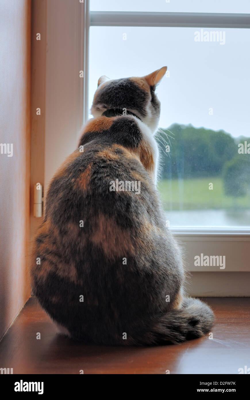 Cat guardando fuori della finestra Immagini Stock
