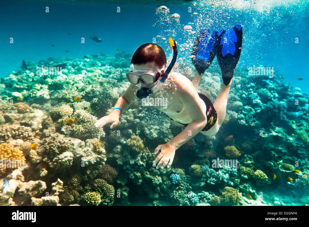 Snorkeler diving lungo il cervello coral Immagini Stock
