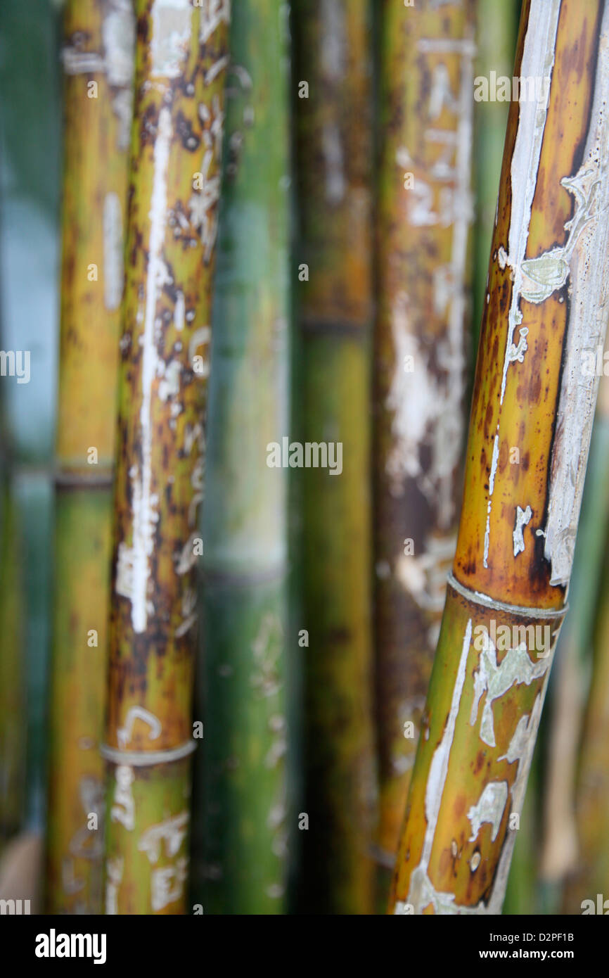 Colori, modelli e forme in una gabbia di bambù Immagini Stock