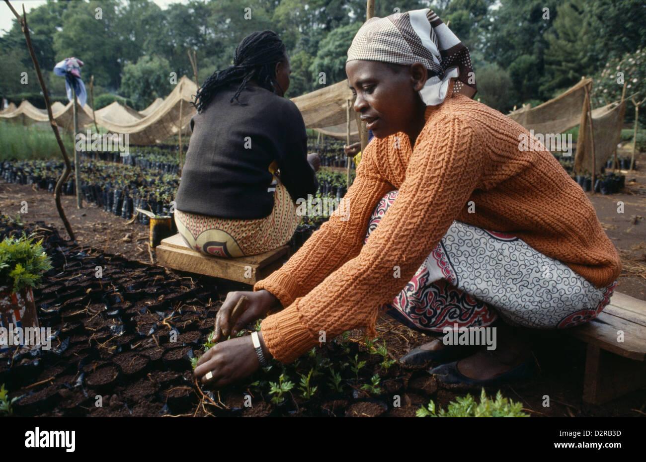 Kenya, Africa Orientale, Meru, donne piantare le piantine in un vivaio per progetto di rimboschimento. Immagini Stock