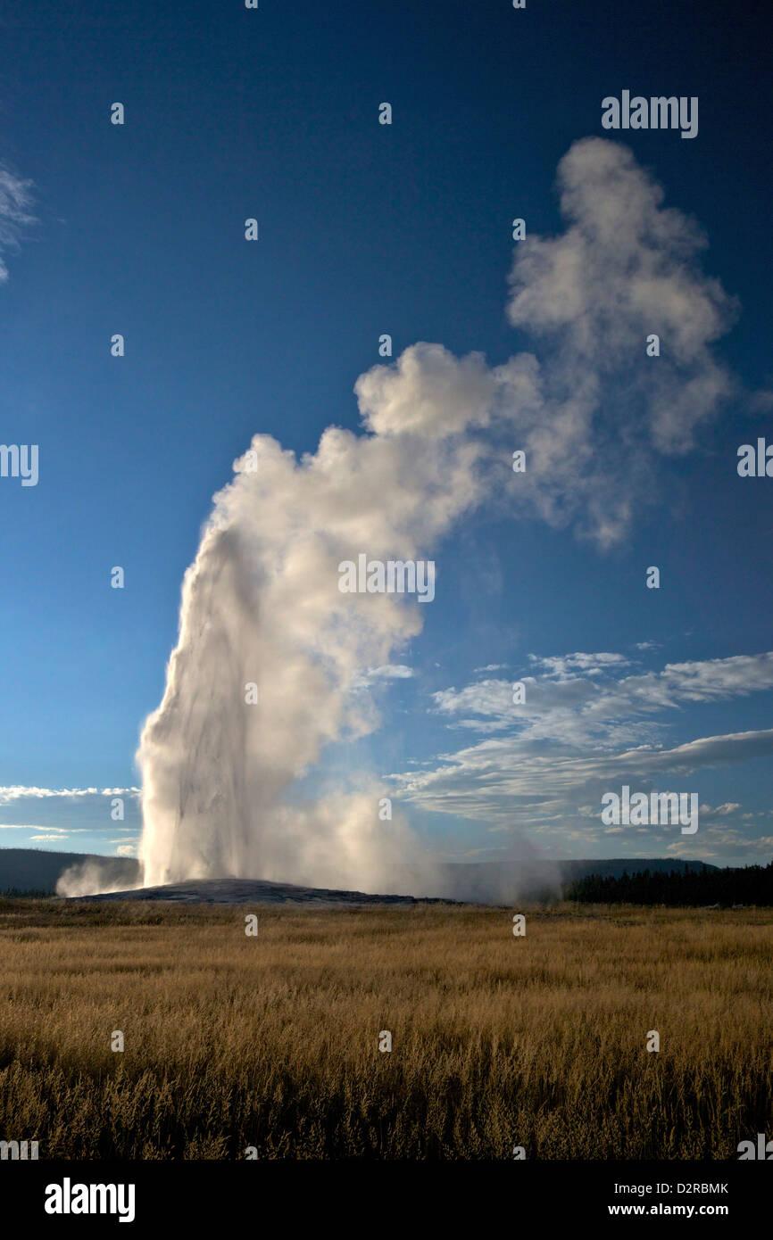 Geyser Old Faithful scoppierà in estate luce della sera, il Parco Nazionale di Yellowstone, Wyoming USA Immagini Stock