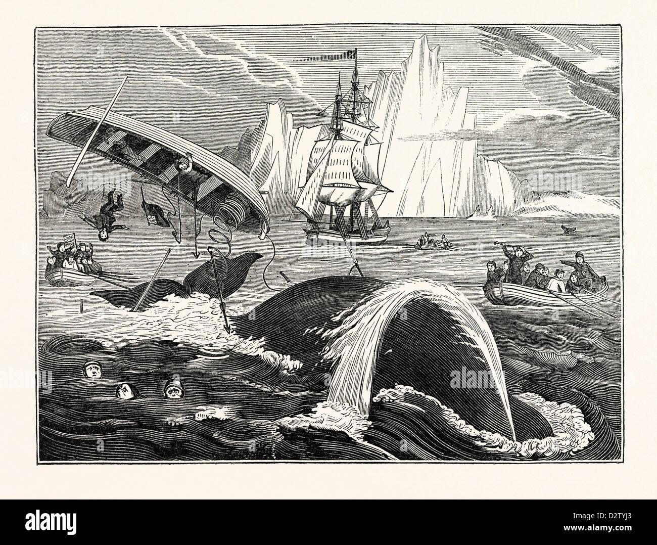 Pericoli della pesca della balena Immagini Stock