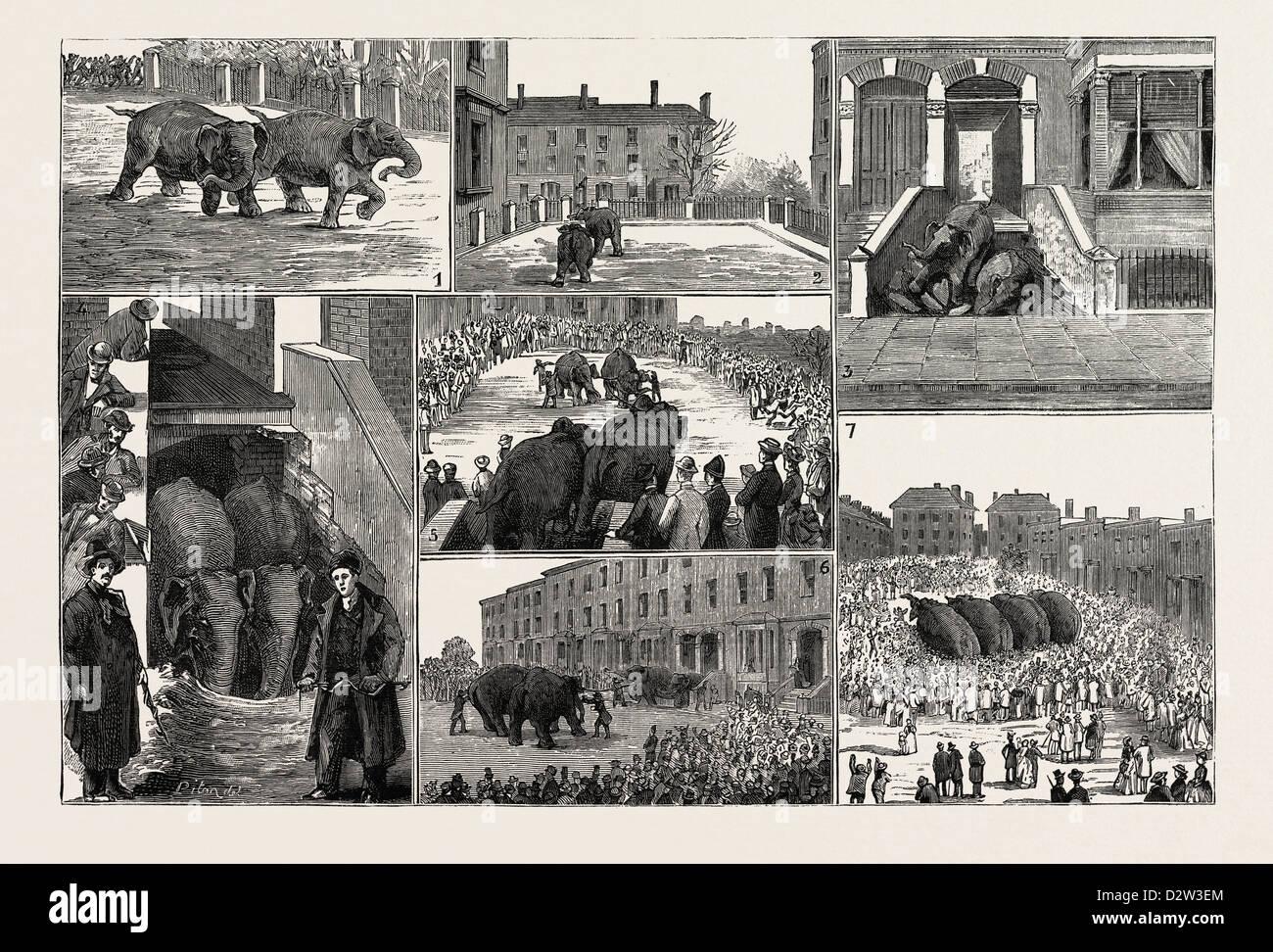 Le strane avventure di due RUNAWAY elefanti in Kentish Town LONDON Immagini Stock