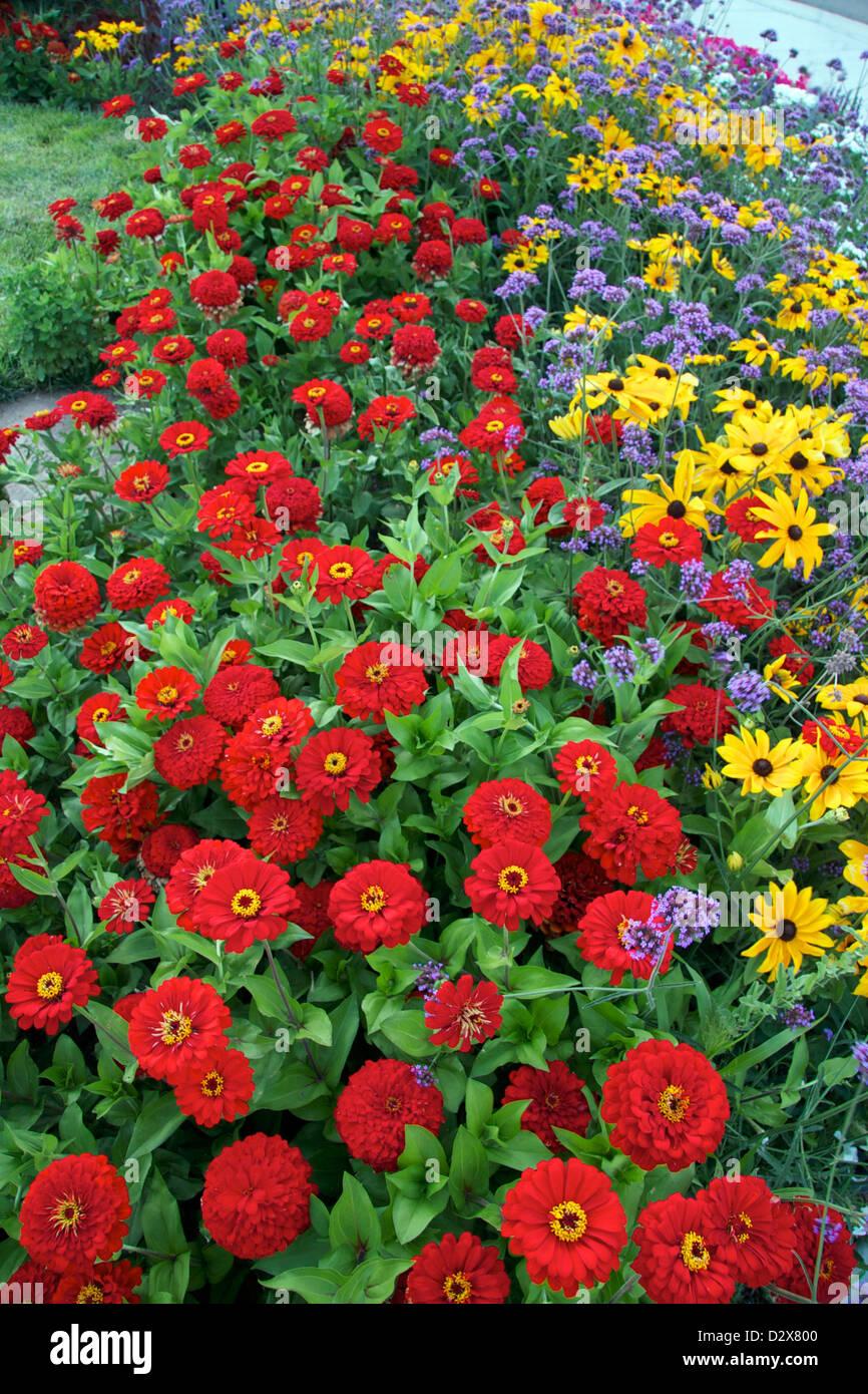 Un fiore coloratissimo confine fatto di tre diversi annuari Foto Stock