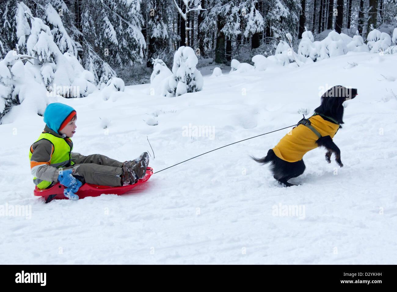 Giovane ragazzo su una slitta che viene tirata dal suo cane Immagini Stock