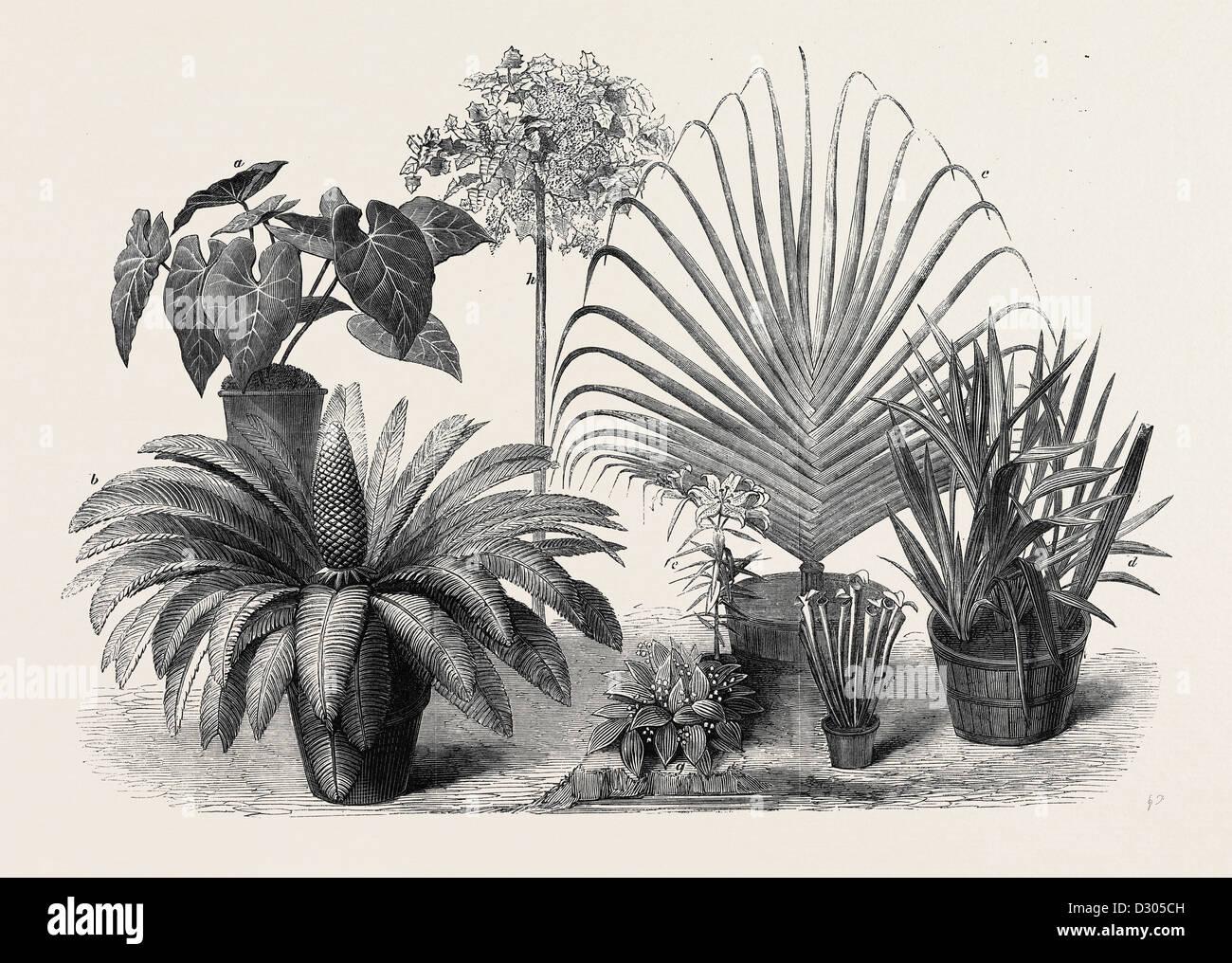 Gruppo di piante rare al fine internazionale mostra orticola SOUTH KENSINGTON LONDON REGNO UNITO 1866 Immagini Stock