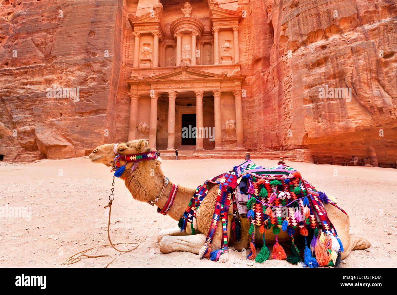 Bedouin camel riposa vicino al tesoro Al Khazneh scavate nella roccia di Petra, Giordania Immagini Stock