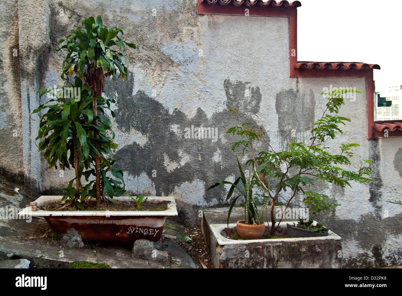 Vasca da bagno piante foto & immagine stock: 53536764 alamy
