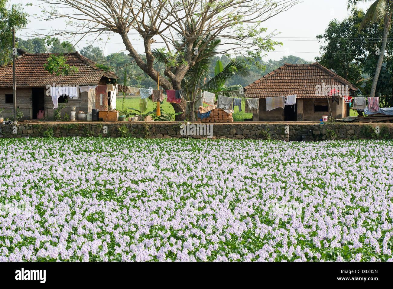 Case locali circondato da fiori sulle lagune di Alappuzha, Alleppey, Kerala, India Immagini Stock