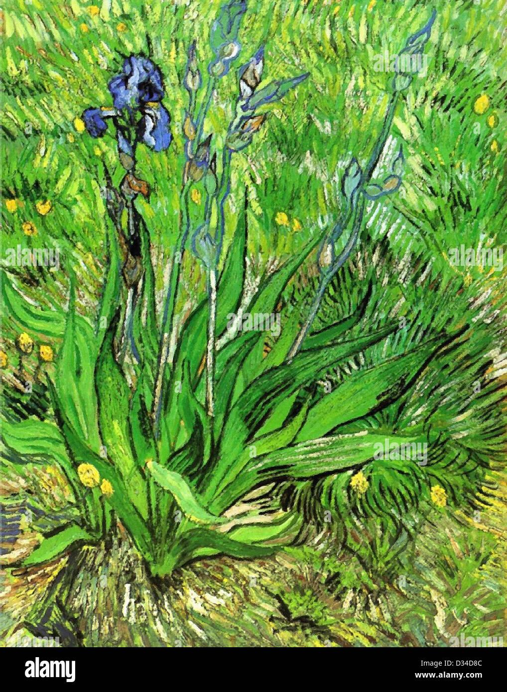 Vincent van Gogh, l'iride. 1889. Post-Impressionism. Olio su tela. Galleria Nazionale del Canada, Ottawa, Canada. Immagini Stock
