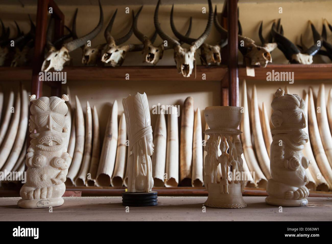 In Camerun, 3 ottobre 2012: avorio intagliato e zanne di elefante confiscato dal Ministero delle Foreste e della Immagini Stock