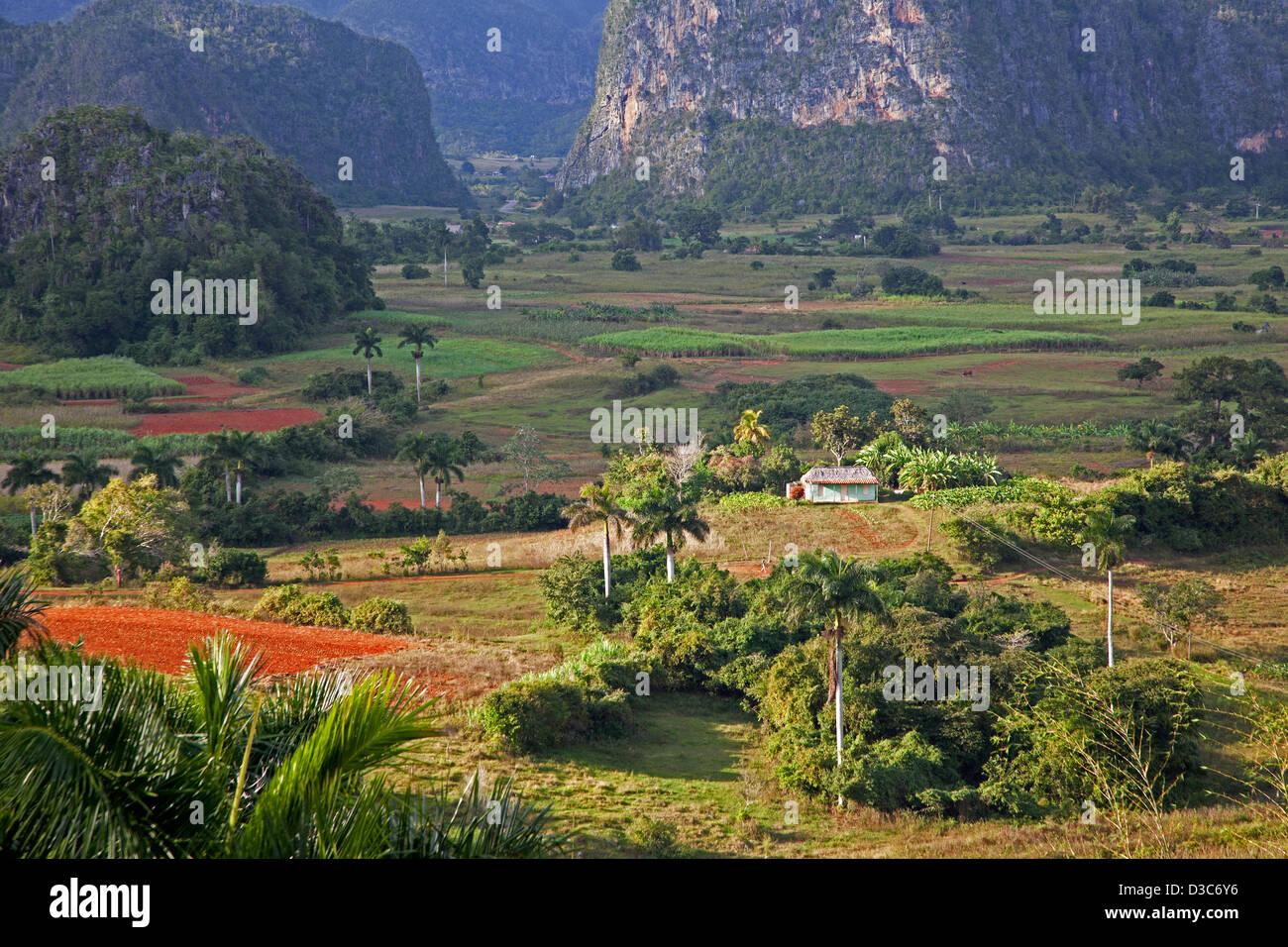 Agricoltura tradizionale nella Valle di Viñales / Valle de Viñales nella Sierra de Los Organos, Pinar Immagini Stock