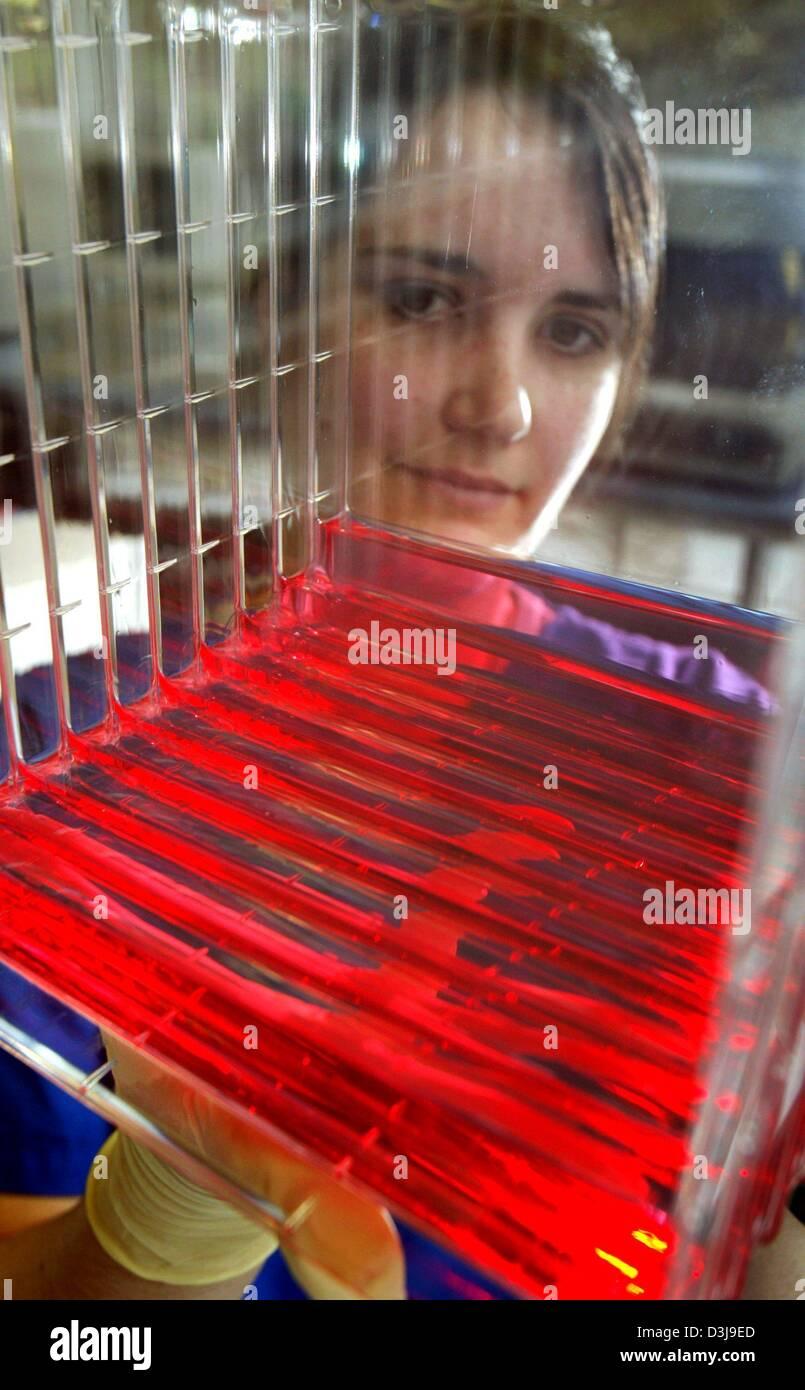 (Dpa) - Un dipendente detiene un deck di vassoi utilizzati per la produzione di vettori retrovirali presso l'Istituto Immagini Stock